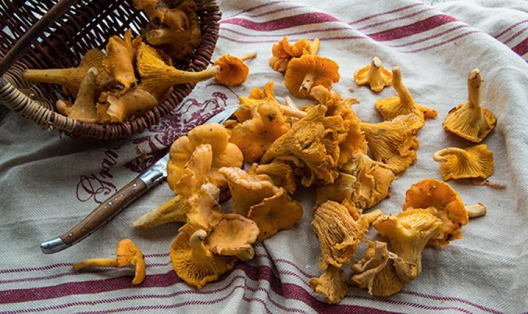 Lozère, pays des champignons