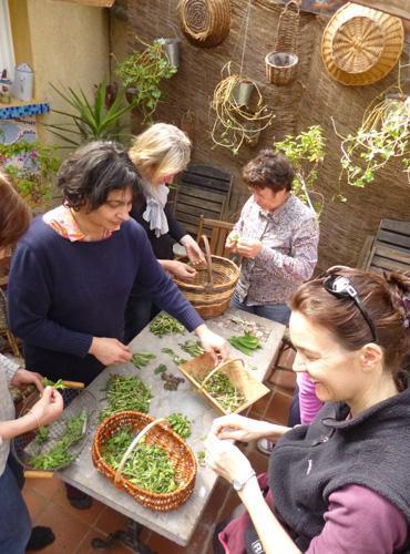 Tri des plantes sauvages à Saint-Germain-du-Teil