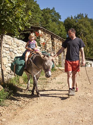 Balade avec un âne près du Chemin de Stevenson