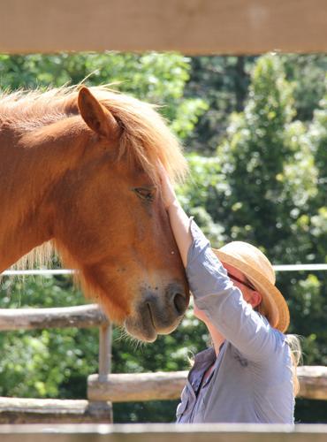 Echange silencieux avec les chevaux