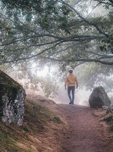 Balade en forêt en Lozère