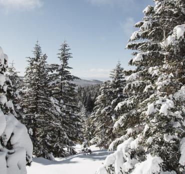 Raquettes au Mont-Lozère