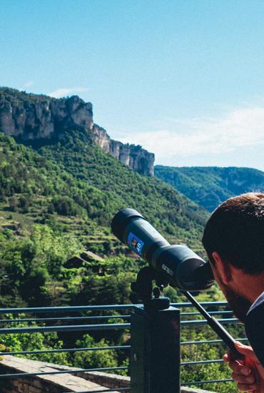 Observation des vautours
