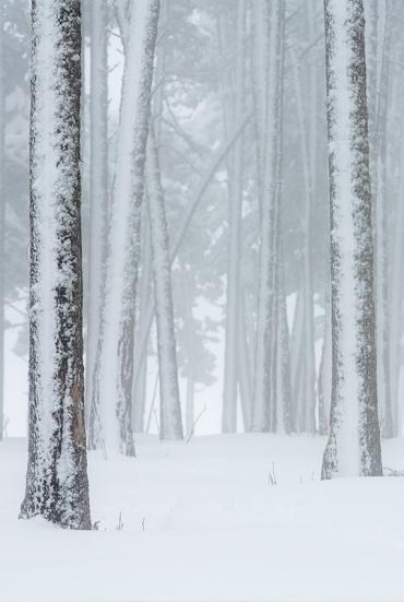 Forêt hivernale