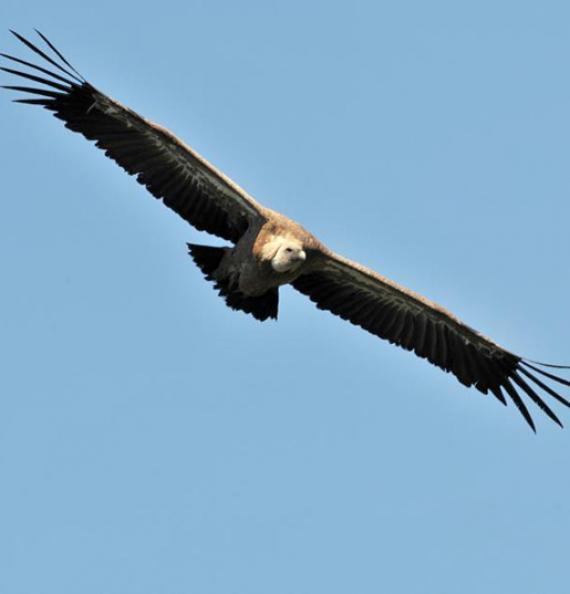 Maison des vautours - Lozère