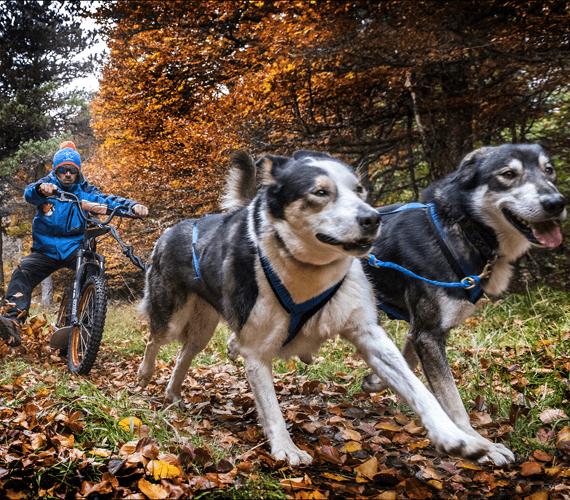 Sensations garanties en cani-trottinette