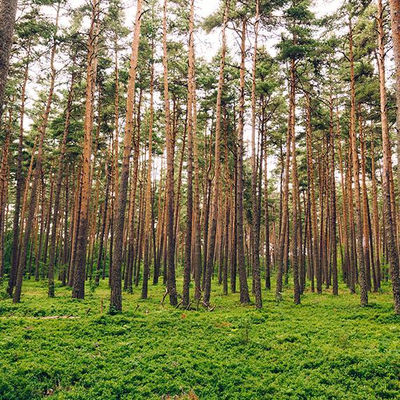 Forêt en Margeride