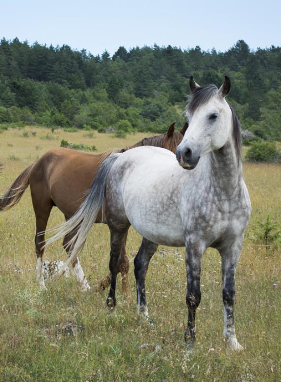 Equitation - Chevaux - Lozère