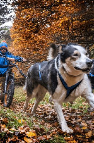 Cani-trottinette en Margeride