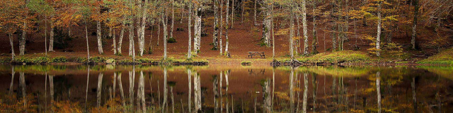 Reflets d'arbres sur un lac